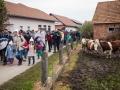Begunci na poti iz Rigonc do 12km oddaljenega zbirnega centra v Brežicah